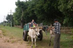 Our bullock cart.
